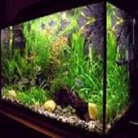 Anandhan Fishtank  & Aquarium